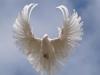 Знаете ли Вы Святого Духа?
